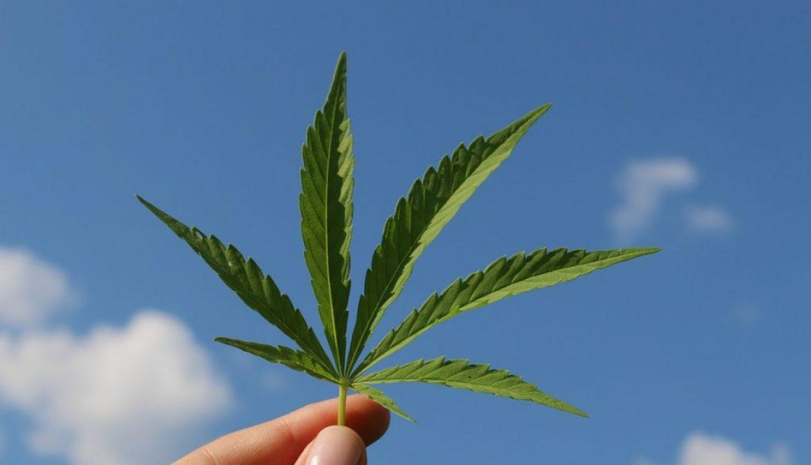 hemp-leaf-3661209_1280