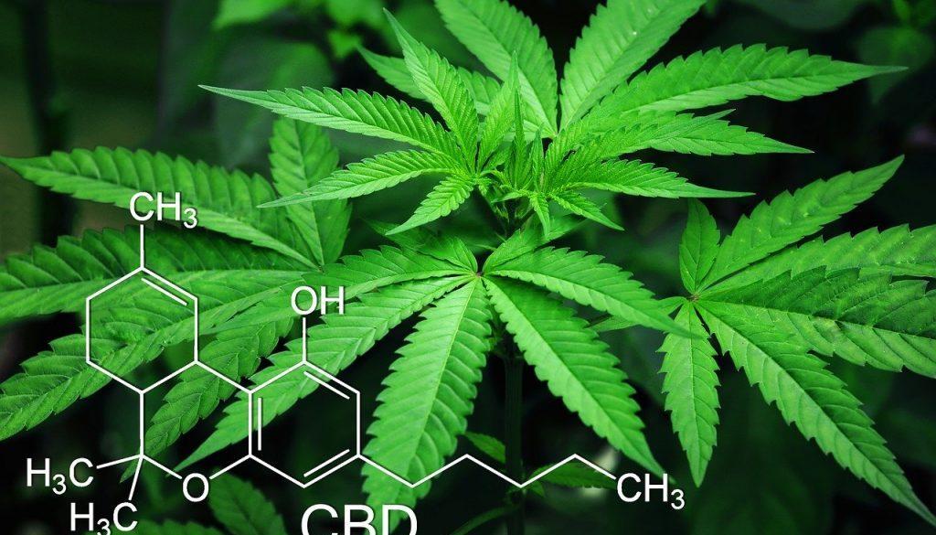 marijuana-3678222_1280